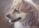 60년 그림 인생 - 반려동물 돕기로 꽃피우길 원해-이종서 화백