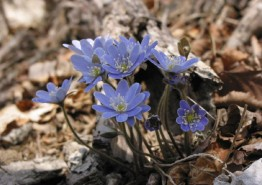 국립공원에서 전하는 봄꽃소식